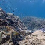 Review : Google Maps เริ่มเผยภาพ Street View ใต้ทะเลแล้ว!!
